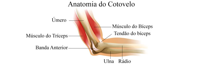 Anatomia do Cotovelo