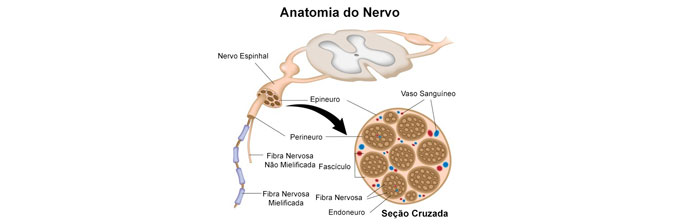 anatomia-do-nervo