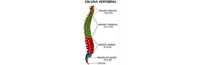 coluna-vertebral-1
