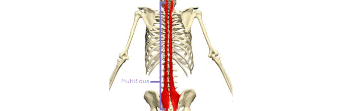 coluna-vertebral-10