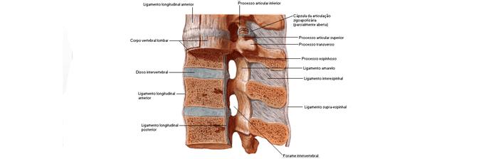 coluna-vertebral-12