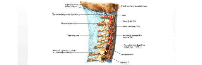 coluna-vertebral-15