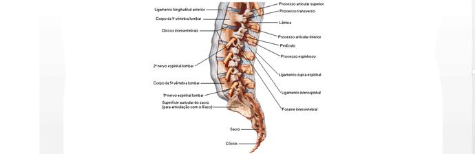 coluna-vertebral-16