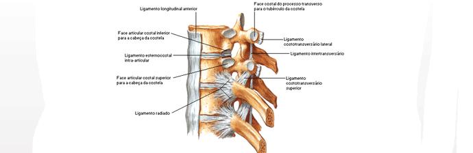 coluna-vertebral-17