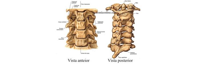 coluna-vertebral-2