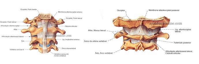 coluna-vertebral-20