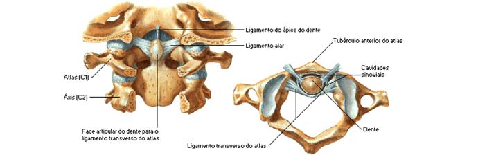 coluna-vertebral-21