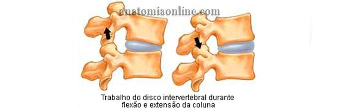 coluna-vertebral-23
