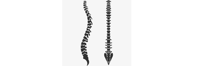 coluna-vertebral-27