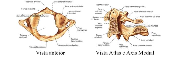 coluna-vertebral-3