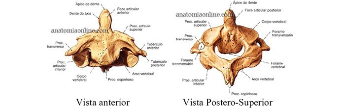 coluna-vertebral-4
