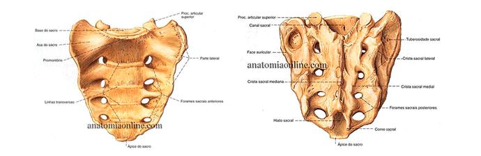 coluna-vertebral-8