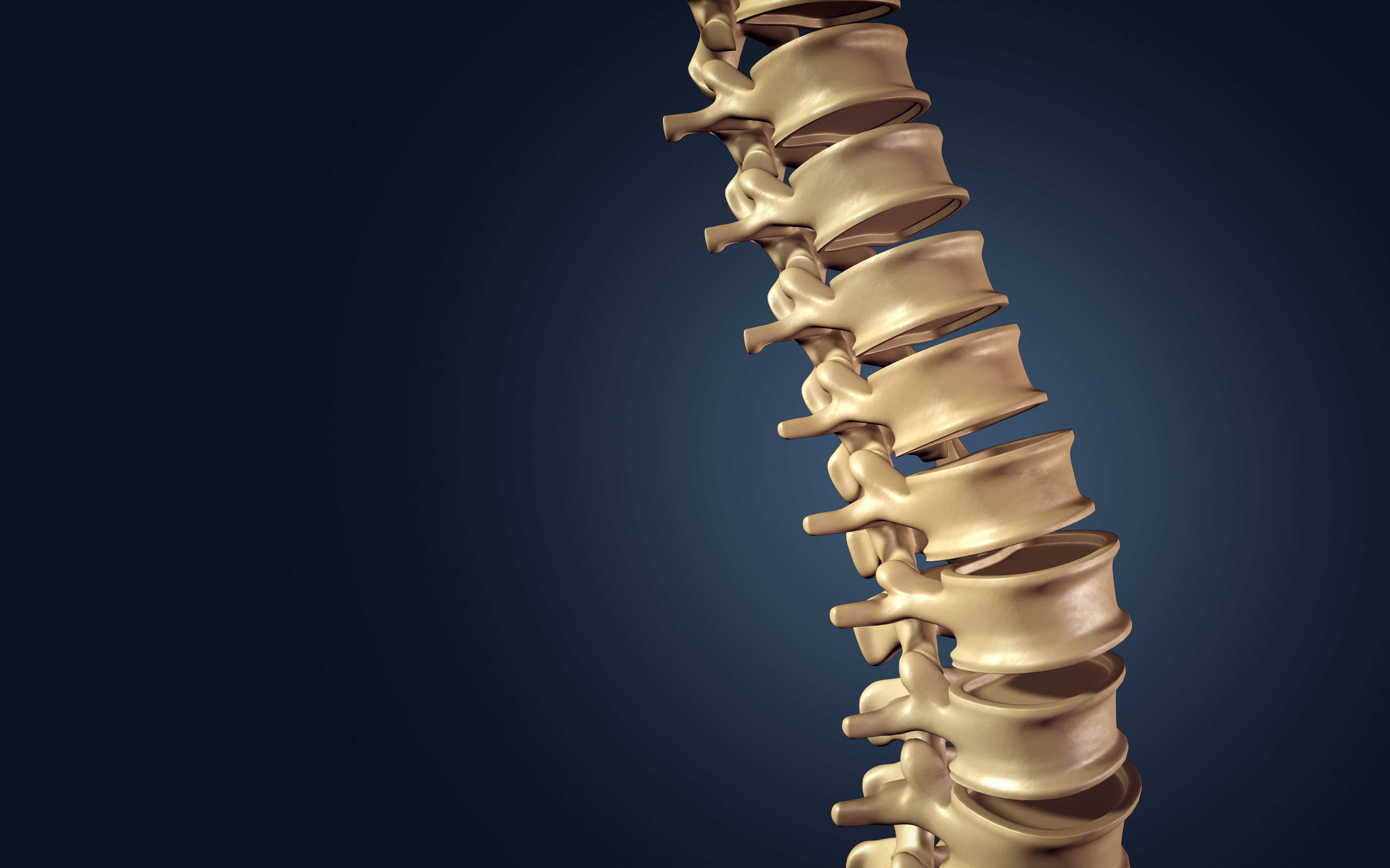 Coluna vertebral: tudo o que você precisa saber sobre sua anatomia