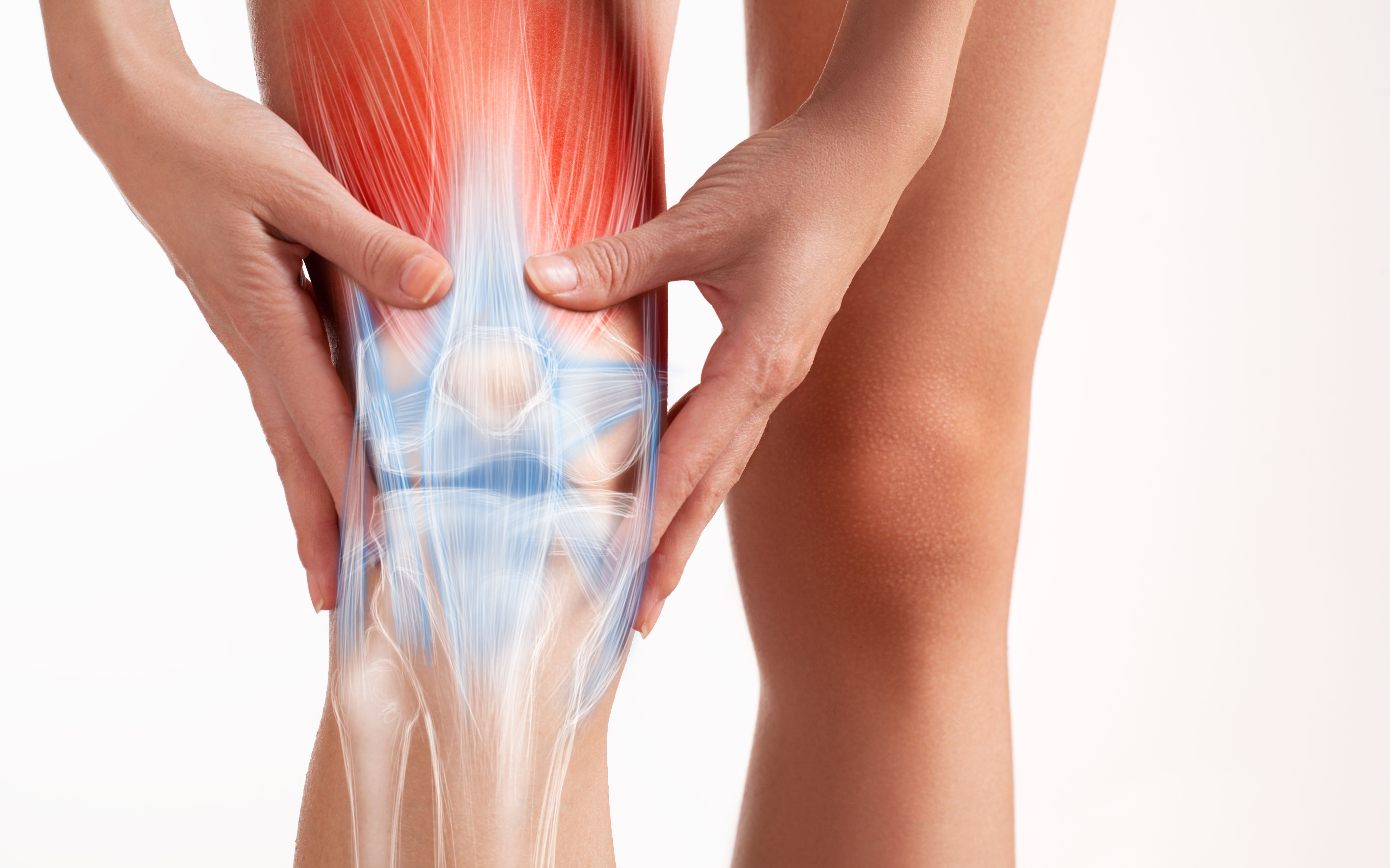 Guia definitivo da anatomia do joelho