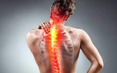 Os 3 músculos importantes para tratar escoliose
