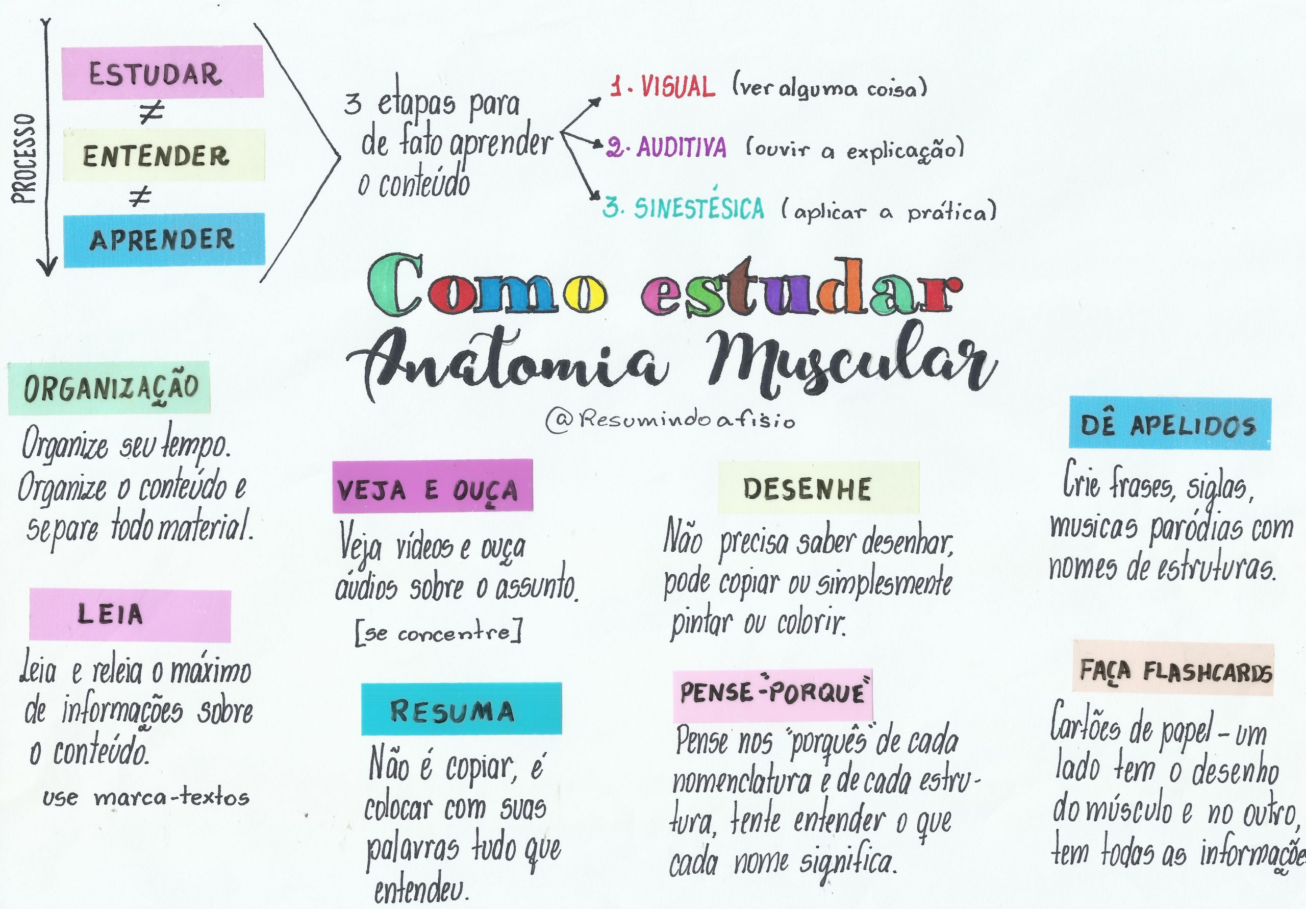 como-aprender-anatomia-muscular