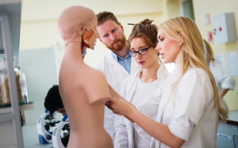 Anatomia muscular: como estudar e aprender sobre o assunto