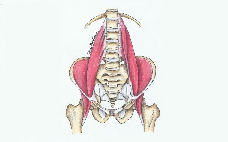 Tudo que você precisa saber sobre o músculo Iliopsoas