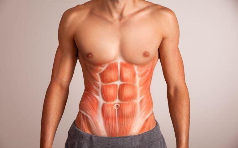 Guia completo sobre regiões e músculos abdominais