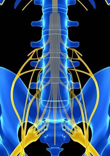 anatomia-dor-lombar