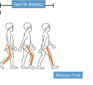 Ciclo da marcha- figura 4