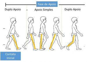 ciclo da marcha - figura 1