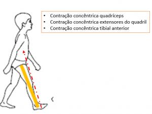 ciclo da marcha - figura 5