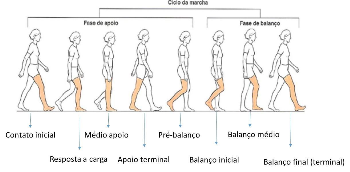imagem ciclo da marcha 5