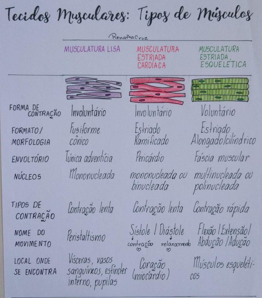 anatomia-dos-tecidos-musculares