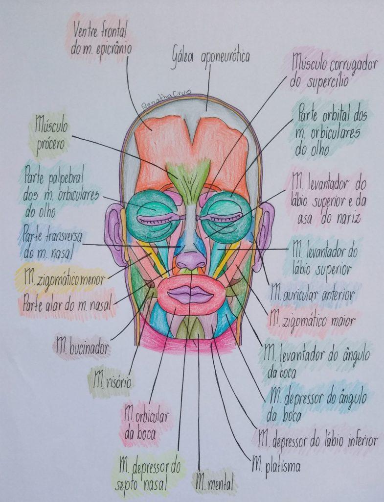 fisiologia-músculos-faciais